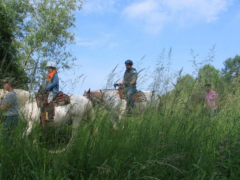 Camping Au Clair Ruisseau paardrijtochten 768x576