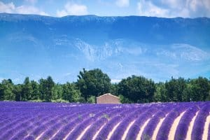 Campings in Alpes-de-Haute-Provence