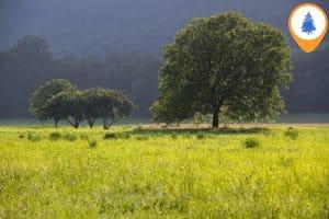 Natuurcampings in Frankrijk