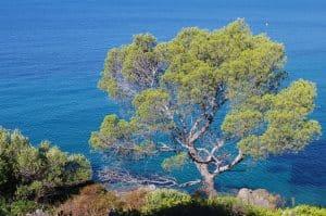 Campings aan de Côte d'Azur